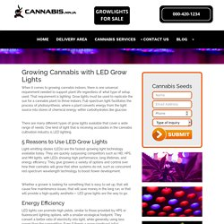 Growing Cannabis With Leds