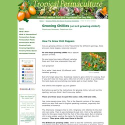 Growing Chillies - How To Grow Chili Peppers From Seed