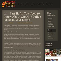 Part II: All You Need to Know About Growing Coffee Trees in Your Home - Thanksgiving Coffee
