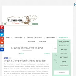 Growing Three Sisters in a Pot - Companion Planting