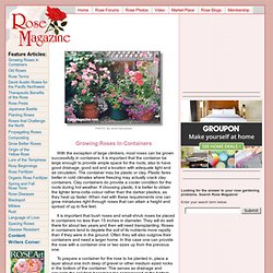 Growing Roses in Containers - Rose Magazine