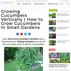 How to Grow Cucumbers in Small Garden