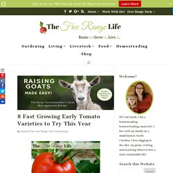 8 Fast Growing Early Tomato Varieties to Try This Year - The Free Range Life