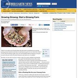 Growing Ginseng: Start A Ginseng Farm