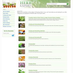 Growing Herbs by Herb Expert (UK)