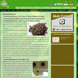 Growing weed - a simple guide from the team at Types of weed @ Types of weed, the World's best medical Marijuana site