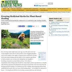 Growing Medicinal Herbs for Plant-Based Healing - Natural Health