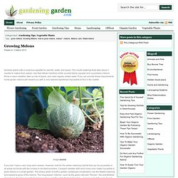 Growing Melons | Gardening
