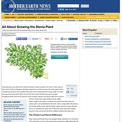 All About Growing the Stevia Plant