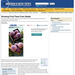 Growing Fruit Trees From Seeds