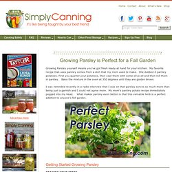 Growing Parsley is Perfect for the Fall Garden
