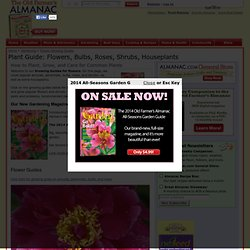 Plants Growing Guide How to Grow Flowers Roses Bulbs Shrubs Perennials Houseplants