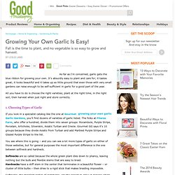 Growing Your Own Garlic - Planting Growing Harvesting and Storing Garlic