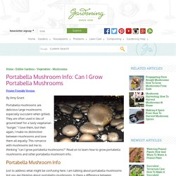 Growing Portabella Mushrooms – How To Grow Portabella Mushrooms At Home