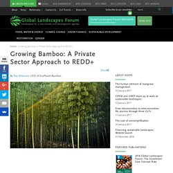 Growing Bamboo: A Private Sector Approach to REDD+