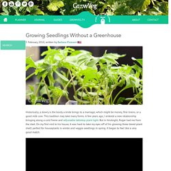 Growing Seedlings Without a Greenhouse