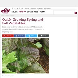Quick-Growing Spring and Fall Vegetables