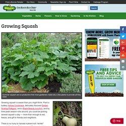 Growing Squash - Bonnie Plants