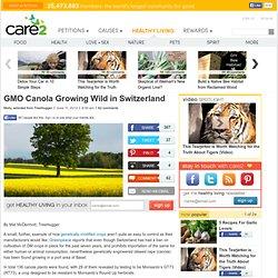 GMO Canola Growing Wild in Switzerland
