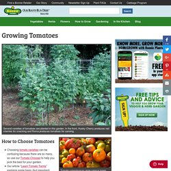 Growing Tomatoes - Bonnie Plants