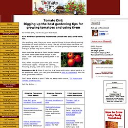 Tomato Dirt: growing tomatoes, gardening tips, tomato facts