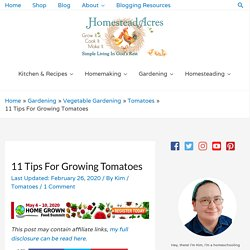 11 Tips For Growing Tomatoes - Homestead Acres