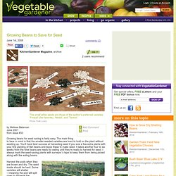 Growing Beans To Save For Seed