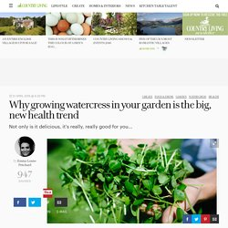 Why growing watercress in your garden is the big, new health trend