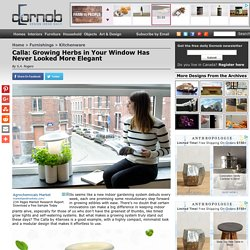 Calla: Growing Herbs in Your Window Has Never Looked More Elegant