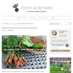 Growing Fall and Winter Carrots