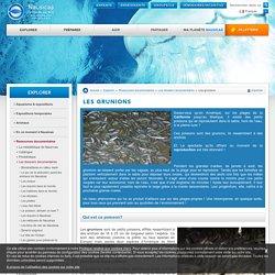 Les grunions expliqués par Nausicaa – Centre National de la Mer