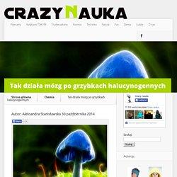 Tak działa mózg po grzybkach halucynogennych - Crazy Nauka