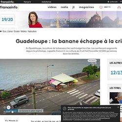 FRANCE 3 26/10/20 Guadeloupe : la banane échappe à la crise - En Guadeloupe, la culture de la banane s'en sort malgré la crise. Les ventes ont augmenté depuis le printemps, rappelle France 3. La culture du fruit fait travailler 10 000 personnes dans les A