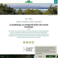 La Guadeloupe, un archipel de forêts à fort attrait touristique