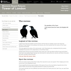 Learn About The Ravens - Known As The Guardians Of The Tower