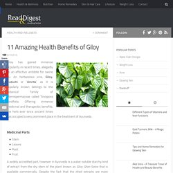 Guduchi or Giloy Benefits for Health