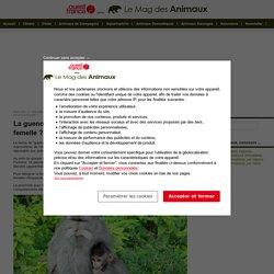 La guenon : de quelle espèce de singe est-elle la femelle ?