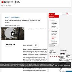 RADIO CANADA 13/06/19 Une guêpe asiatique à l'assaut de l'agrile du frêne (Tetrastichus planipennisi)