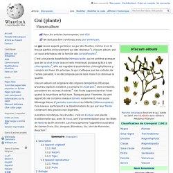 Gui (plante)