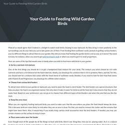 Your Guide to Feeding Wild Garden Birds