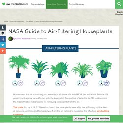 NASA Guide to Air-Filtering Houseplants