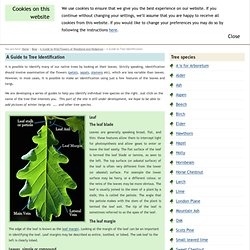 A Guide to Tree Identification