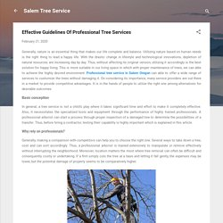 Effective Guidelines Of Professional Tree Services
