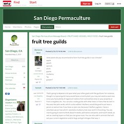 fruit tree guilds - San Diego Permaculture (San Diego, CA