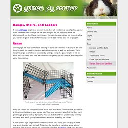 Guinea Pig Ramps, Stairs, and Ladders