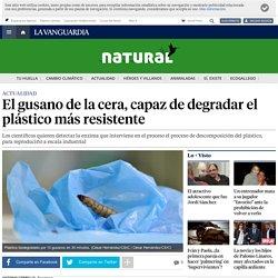 El gusano enemigo de los plásticos