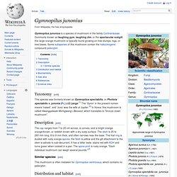 Gymnopilus junonius