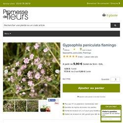 La Gypsophile paniculata flamingo, un nuage petites fleurs doubles rose pâle.