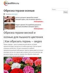 Обрезка герани осенью — h-people.ru