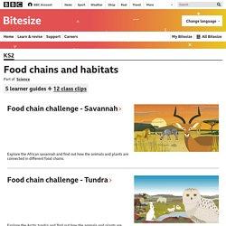 Food chains and habitats - KS2 Science - BBC Bitesize
